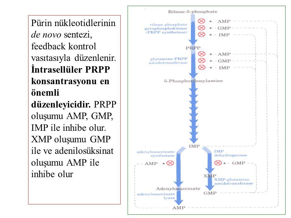 Pürin nükleotidlerinin de novo sentezi, feedback kontrol vasıtasıyla düzenlenir. İntrasellüler PRPP konsantrasyonu en önemli düzenleyicidir. PRPP oluş
