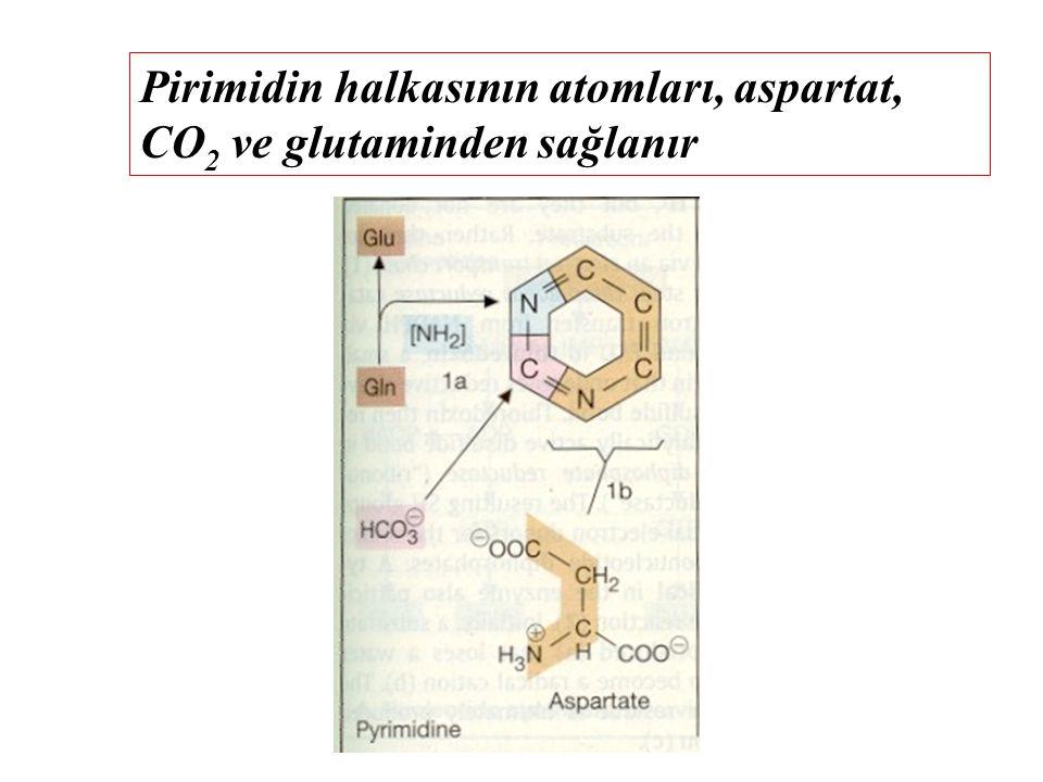 Pirimidin halkasının atomları, aspartat, CO 2 ve glutaminden sağlanır