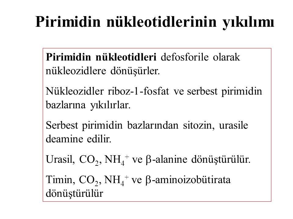 Pirimidin nükleotidlerinin yıkılımı Pirimidin nükleotidleri defosforile olarak nükleozidlere dönüşürler. Nükleozidler riboz-1-fosfat ve serbest pirimi