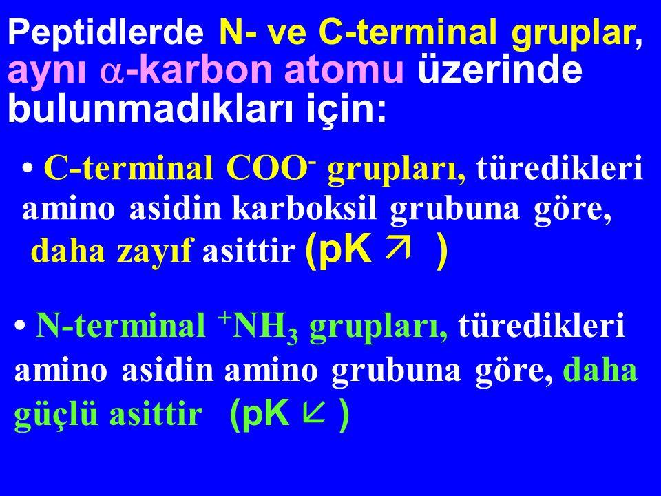 Fizyolojik pH'da, Peptid (amid) bağı: yüksüz Peptidler: yüklü Peptidlerin İyonizasyon Davranışları Peptid bağını oluşturan amino ve karboksil grupları, peptidlerin asit-baz özelliklerine katkıda bulunamazlar Peptidlerin asit-baz özelliği : -Amino ve karboksi terminaller -İyonize yan zincirlerin sayısı ve cinsi
