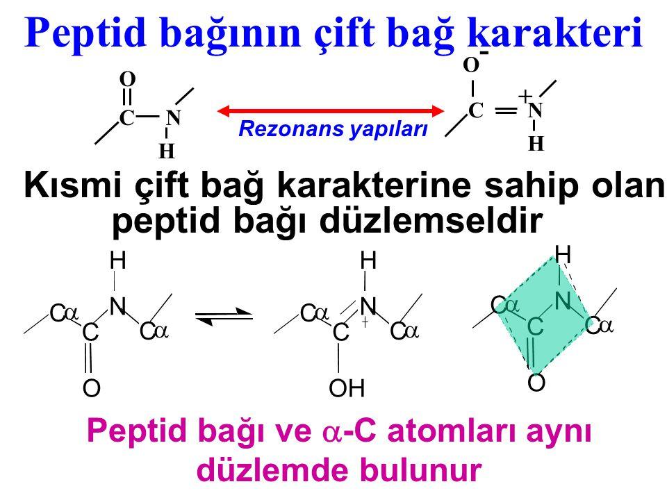İyonize yan zincir taşıyan peptidlerin İyonizasyonu CH – COOH CH 2 SH O – C – N – H CH 3 O H 3 N + CH – C – N – CH H COOH (CH 2 ) 2 + NH 3 (CH 2 ) 4 O – C – N – CH H Alanil - glutamil - lizil - sistein 0 7.4 - 3  10 +2  3 Net yük pH