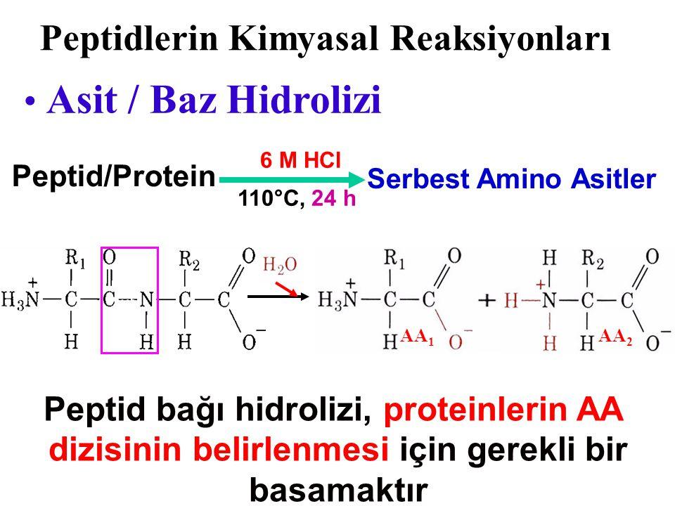 Peptid bağı düzlemi hareketsiz olmasına rağmen,  - karbon etrafındaki rotasyon polipeptid zincirine esneklik kazandırır  -karbon Amid düzlemi Alfa - Karbon Etrafında Rotasyon Protein iskeleti boyunca rotastonu sağlayan bağlar