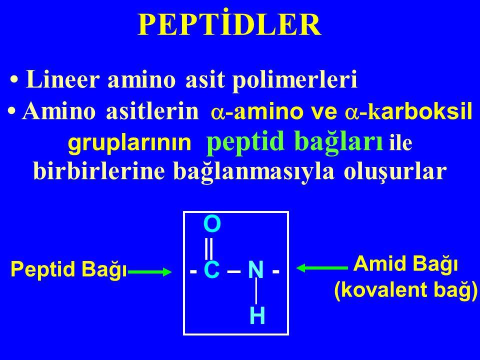 Amino asitlerin  - a mino ve  -k arboksil gruplarının peptid bağları ile birbirlerine bağlanmasıyla oluşurlar Peptid Bağı O ‖ - C – N -  H Amid Bağı (kovalent bağ) Lineer amino asit polimerleri