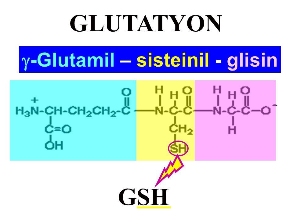 Fizyolojik Olarak Aktif Peptidler Peptid AA sayısı AA Dizisi Karnozin dipeptid Histidil-ß-alanin Anserin dipeptidMetilhistidil-ß-alanin Glutatyon (GSH) tripeptid  -Glutamil-sisteinil-glisin Bradikininnanopeptid Kallidin (Lizil-bradikinin) dekapeptid Kas yapısı Plazma proteinlerinin hidrolizi ile açığa çıkarlar -Düz kasları gevşetir -Antienflamatuvar