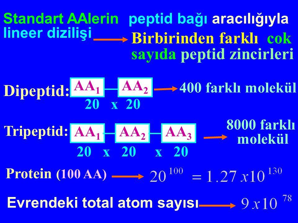 Organizmada en yüksek oranda bulunan makromoleküller % 70 su % 15 protein % 15 diğer Total hücre ağırlığı Amino asitlerin lineer polimerleri Farklı Cins Sayı sıralanma (n tane) 20 St AA PROTEİN