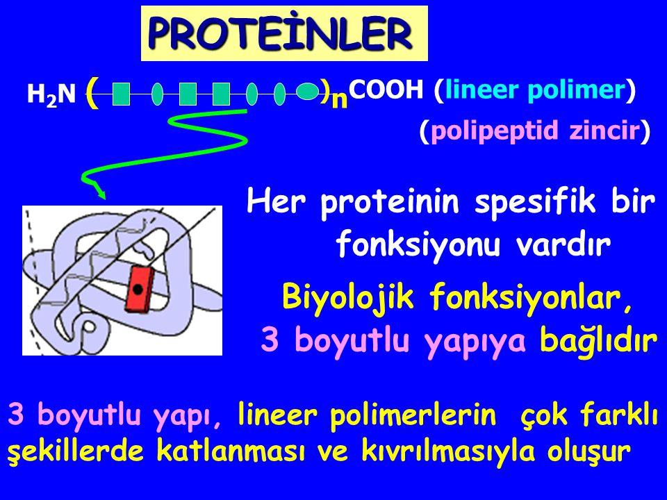 . PROTEİNLER Sınırsız sayıda farklı protein yapıları AA sekansı: 20 n AA sayısı: n H2N (H2N ( ) n COOH Amino asitler lineer polimerler :