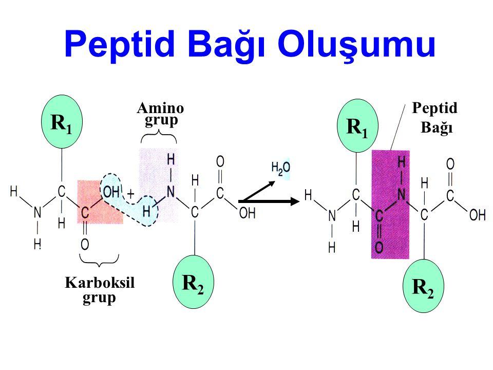 R1R1 R2R2 R1R1 R2R2 Karboksil grup Amino grup Peptid Bağı Peptid Bağı Oluşumu