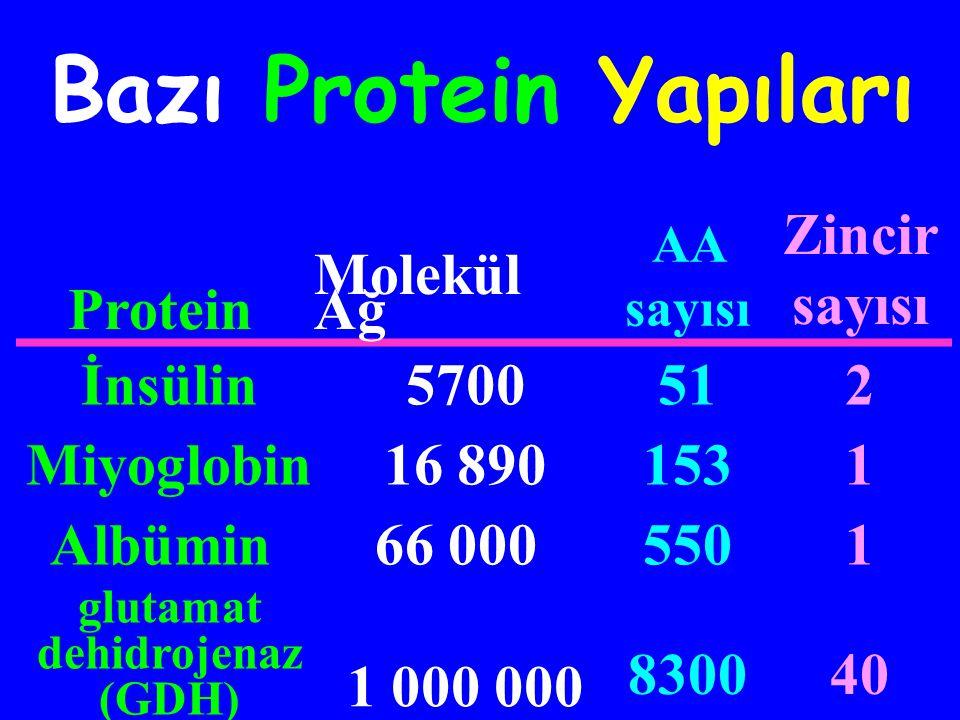 Kompleks Molekül ağırlığı büyük Birden çok polipeptid zincir içerebilir Nitrojen miktarı (amino asitlerin NH 2 grupları) sabit (Proteinin%17'si) 3 boyutlu protein yapıları
