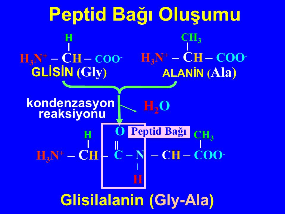 O C H N O C H N - + Rezonans yapıları Peptid bağının çift bağ karakteri Kısmi çift bağ karakterine sahip olan peptid bağı düzlemseldir C  C N C  O H C  C N C  OH H Peptid bağı ve  -C atomları aynı düzlemde bulunur C  C N C  O H