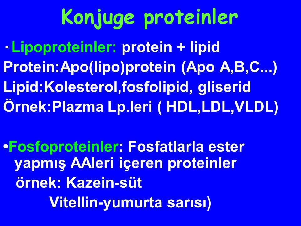 Konjuge proteinler L-  - amino asitlerin yanı sıra,başka kimyasal grupları (prostetik grup)da içerirler Glikoproteinler : protein + COH grup Karbohidrat(oligosakkarit) ünitelerini içerirler Örnek: membran proteinleri plazma proteinleri(globulinler), : Nükleoproteinler : protein+nükleik asit (histonlar) (DNA,RNA)