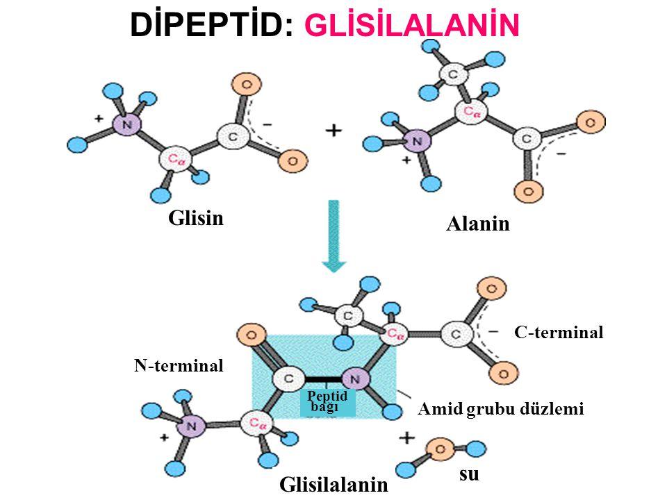 H 3 N + – C H – COO - H GLİSİN ( Gly ) ALANİN ( Ala) H 3 N + – C H – COO - CH 3 H 3 N + – C H – H – CH – COO - CH 3 O ‖ C _ N  H H2OH2O kondenzasyon reaksiyonu Peptid Bağı Peptid Bağı Oluşumu Glisilalanin (Gly-Ala)