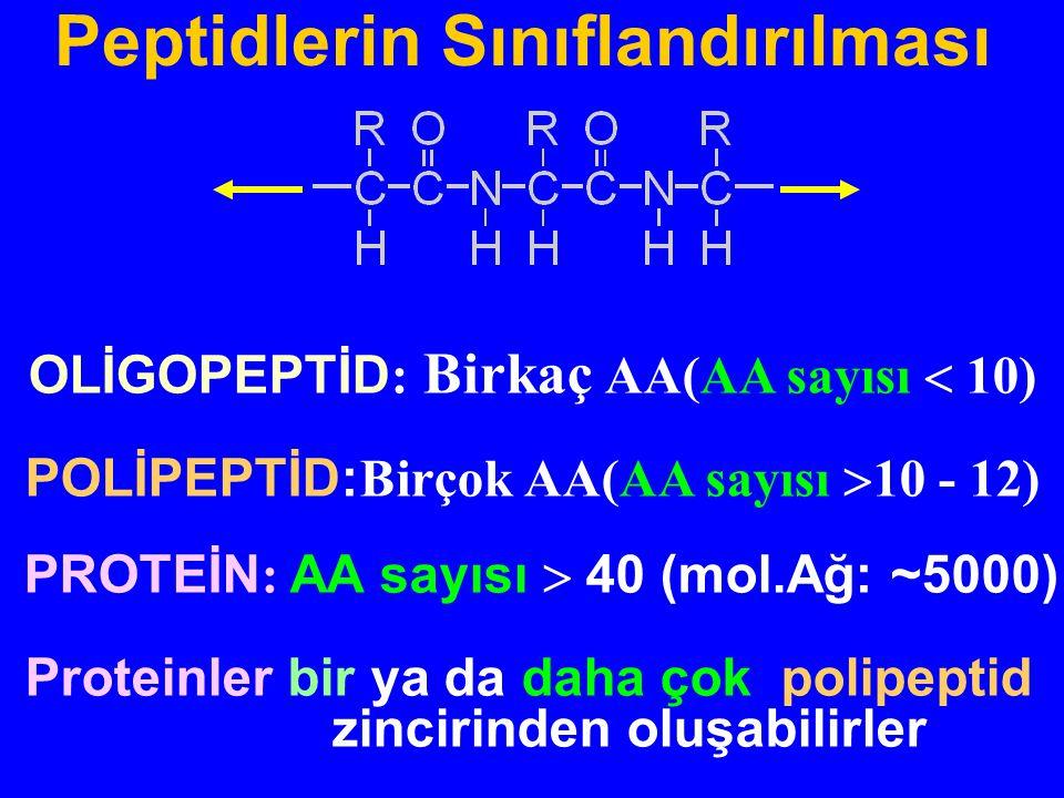 OLİGOPEPTİD : Birkaç AA(AA sayısı  10) POLİPEPTİD: Birçok AA(AA sayısı  10 - 12) PROTEİN : AA sayısı  40 (mol.Ağ: ~5000) Proteinler bir ya da daha çok polipeptid zincirinden oluşabilirler Peptidlerin Sınıflandırılması