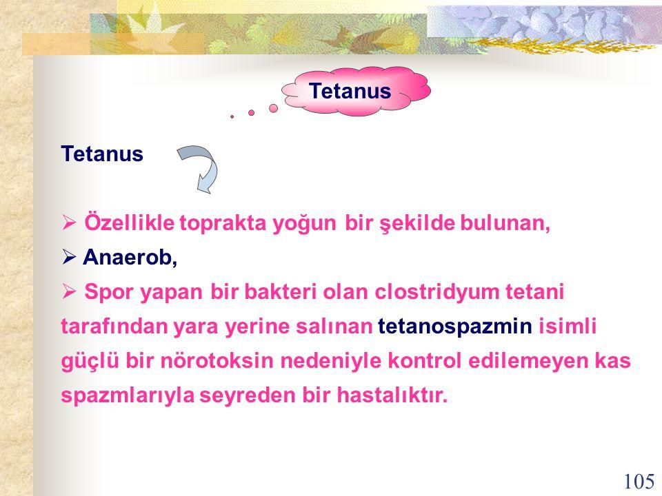 105 Tetanus  Özellikle toprakta yoğun bir şekilde bulunan,  Anaerob,  Spor yapan bir bakteri olan clostridyum tetani tarafından yara yerine salınan