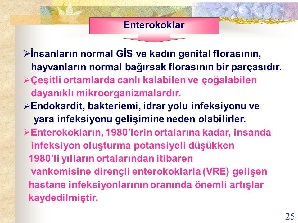 25  İnsanların normal GİS ve kadın genital florasının, hayvanların normal bağırsak florasının bir parçasıdır.  Çeşitli ortamlarda canlı kalabilen ve