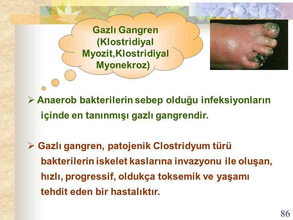 86  Anaerob bakterilerin sebep olduğu infeksiyonların içinde en tanınmışı gazlı gangrendir.  Gazlı gangren, patojenik Clostridyum türü bakterilerin