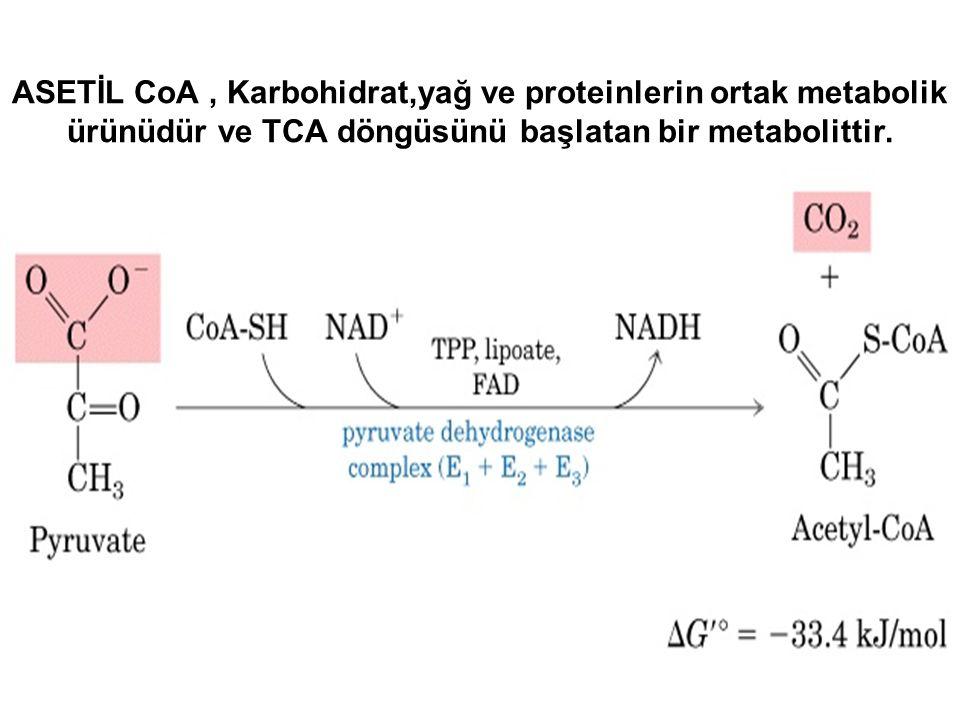 ASETİL CoA, Karbohidrat,yağ ve proteinlerin ortak metabolik ürünüdür ve TCA döngüsünü başlatan bir metabolittir.