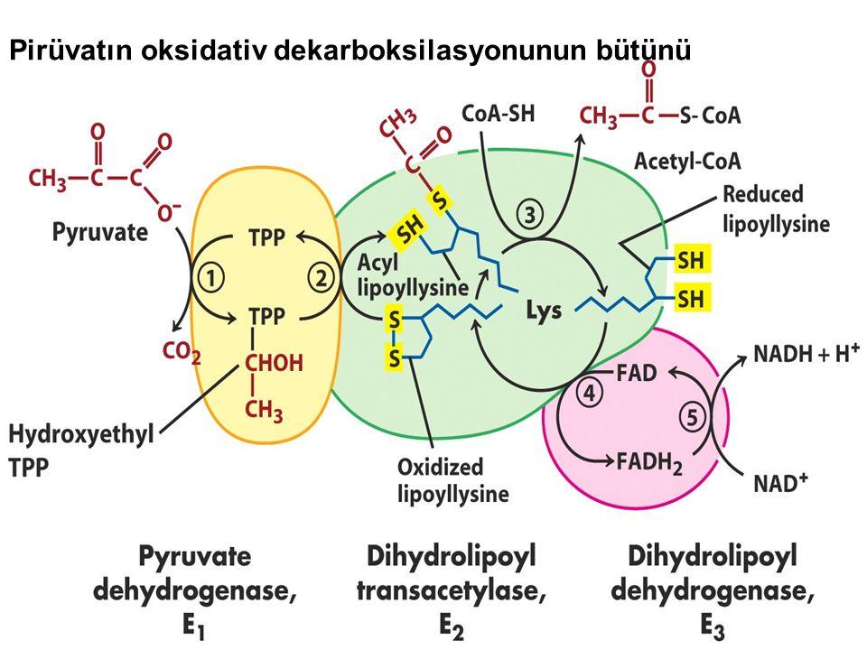 Pirüvatın oksidativ dekarboksilasyonunun bütünü