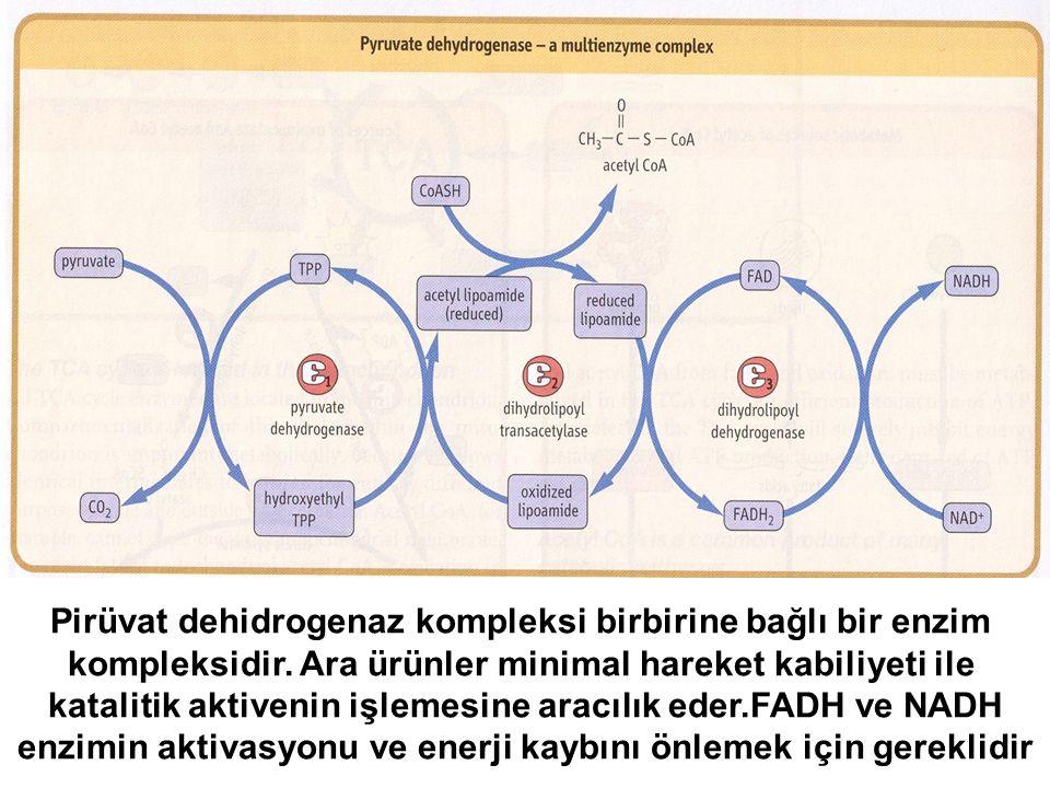 Pirüvat dehidrogenaz kompleksi birbirine bağlı bir enzim kompleksidir. Ara ürünler minimal hareket kabiliyeti ile katalitik aktivenin işlemesine aracı