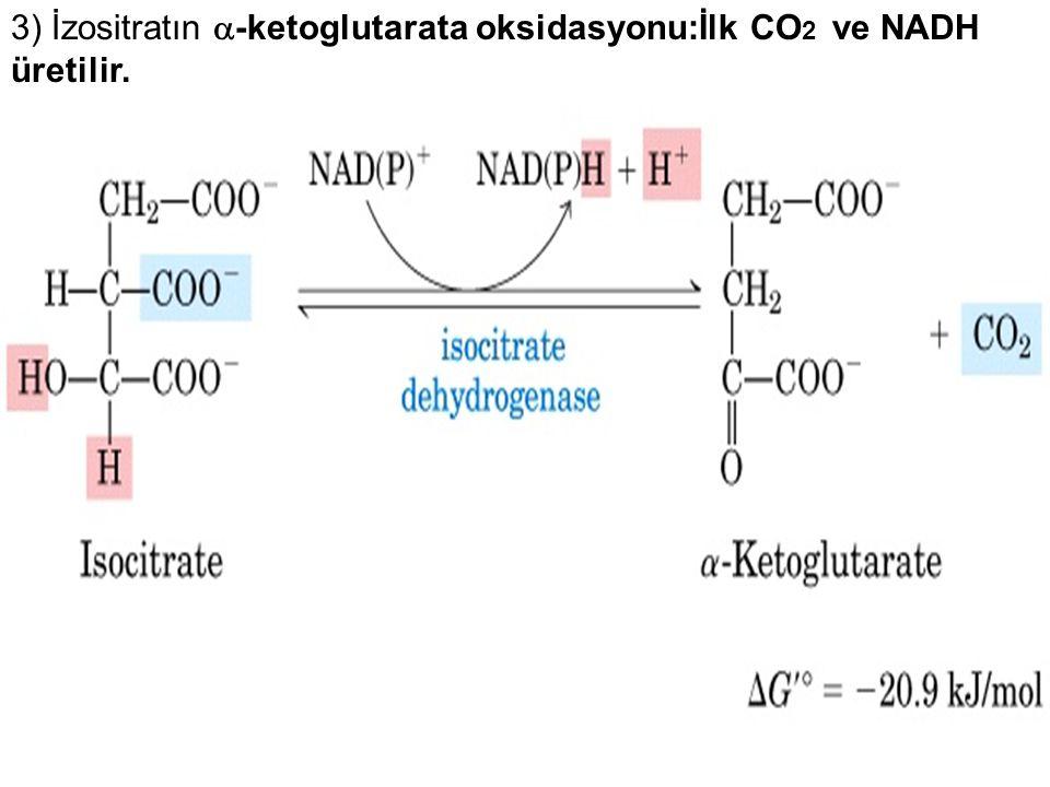 3) İzositratın  -ketoglutarata oksidasyonu:İlk CO 2 ve NADH üretilir.