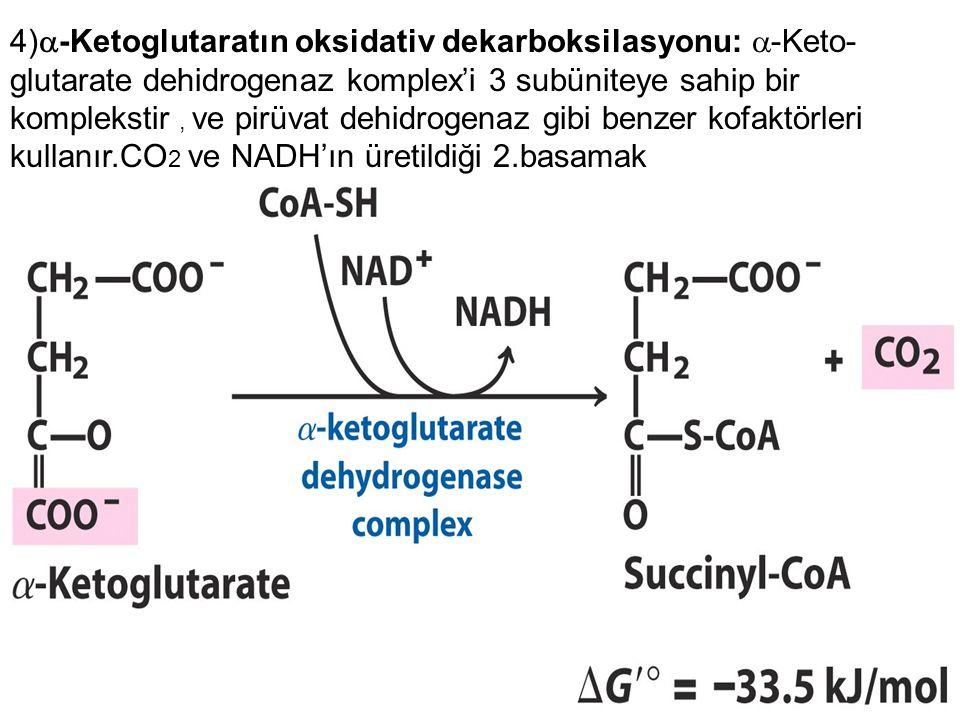 4)  -Ketoglutaratın oksidativ dekarboksilasyonu:  -Keto- glutarate dehidrogenaz komplex'i 3 subüniteye sahip bir komplekstir, ve pirüvat dehidrogenaz gibi benzer kofaktörleri kullanır.CO 2 ve NADH'ın üretildiği 2.basamak