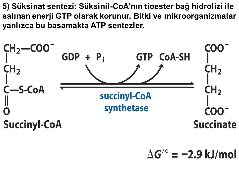 5) Süksinat sentezi: Süksinil-CoA'nın tioester bağ hidrolizi ile salınan enerji GTP olarak korunur. Bitki ve mikroorganizmalar yanlızca bu basamakta A