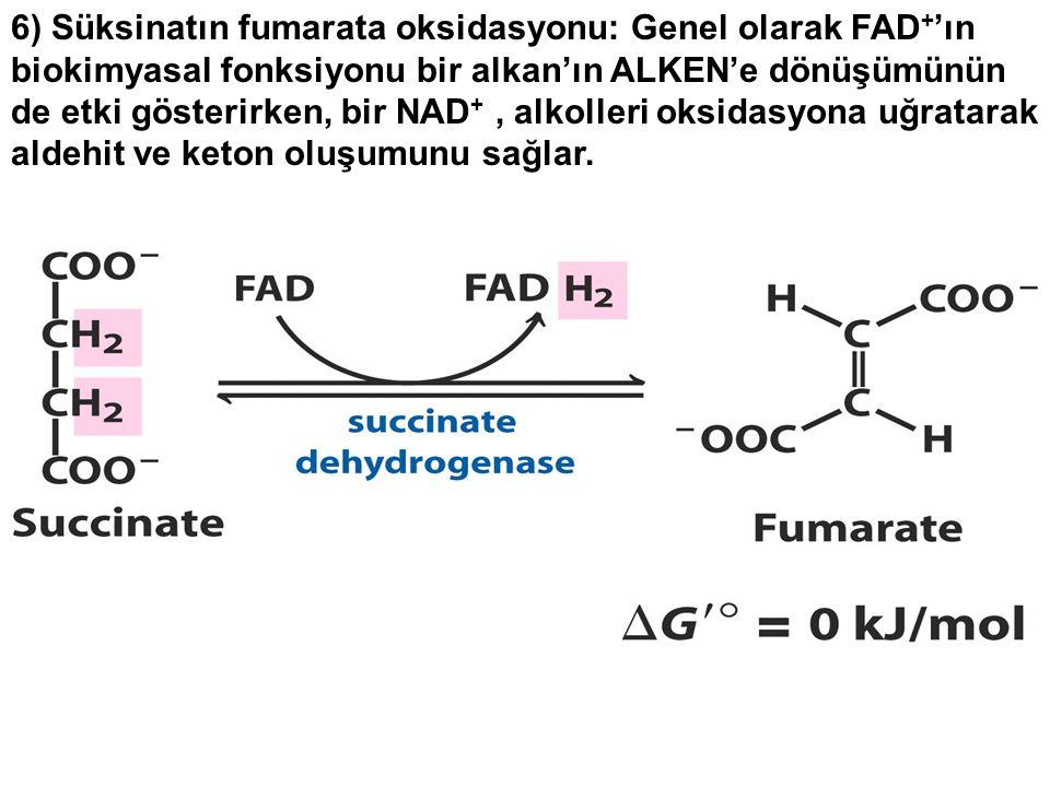 6) Süksinatın fumarata oksidasyonu: Genel olarak FAD + 'ın biokimyasal fonksiyonu bir alkan'ın ALKEN'e dönüşümünün de etki gösterirken, bir NAD +, alkolleri oksidasyona uğratarak aldehit ve keton oluşumunu sağlar.