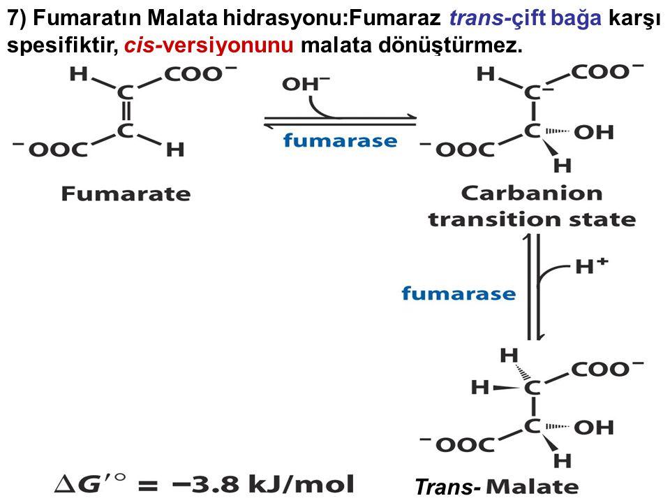 7) Fumaratın Malata hidrasyonu:Fumaraz trans-çift bağa karşı spesifiktir, cis-versiyonunu malata dönüştürmez. Trans-