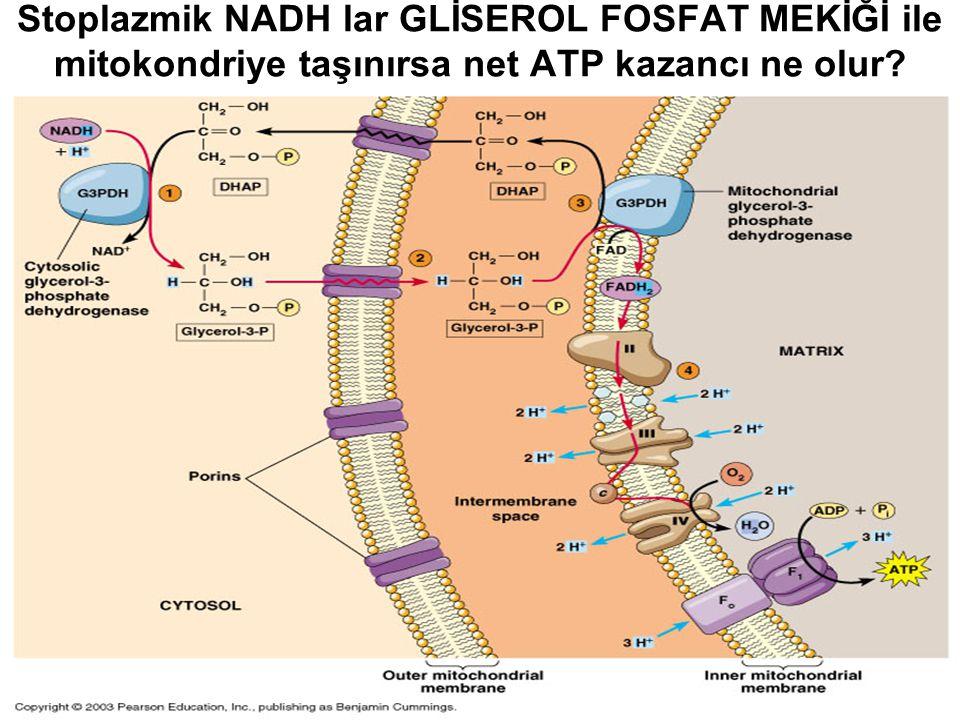 Stoplazmik NADH lar GLİSEROL FOSFAT MEKİĞİ ile mitokondriye taşınırsa net ATP kazancı ne olur?