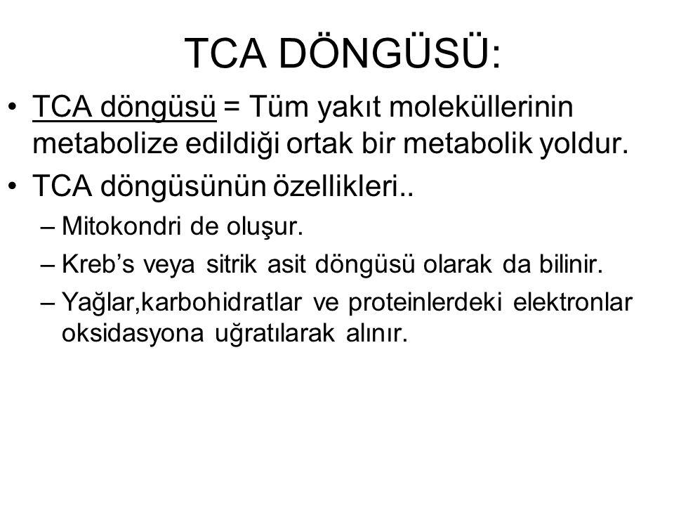 TCA DÖNGÜSÜ: TCA döngüsü = Tüm yakıt moleküllerinin metabolize edildiği ortak bir metabolik yoldur. TCA döngüsünün özellikleri.. –Mitokondri de oluşur
