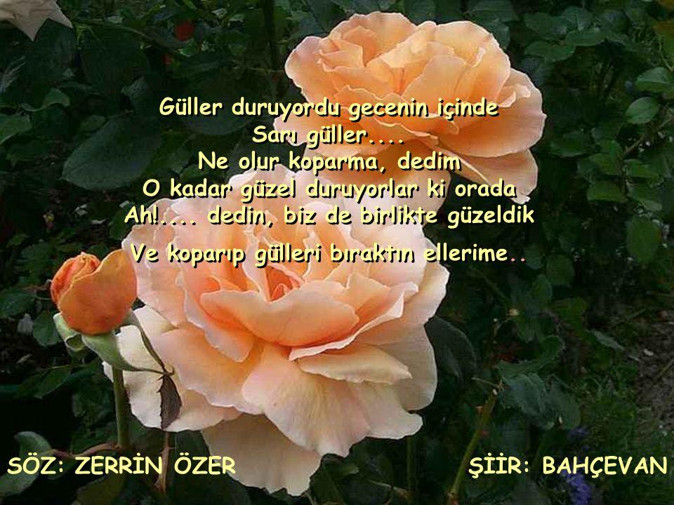 Güller duruyordu gecenin içinde Sarı güller.... Ne olur koparma, dedim O kadar güzel duruyorlar ki orada Ah!.... dedin, biz de birlikte güzeldik Ve ko