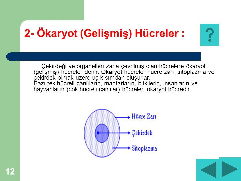 12 2- Ökaryot (Gelişmiş) Hücreler : Çekirdeği ve organelleri zarla çevrilmiş olan hücrelere ökaryot (gelişmiş) hücreler denir.