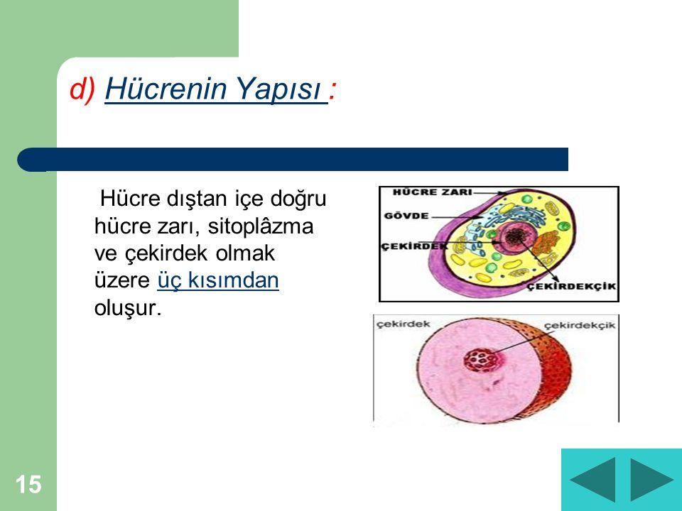 15 d) Hücrenin Yapısı :Hücrenin Yapısı Hücre dıştan içe doğru hücre zarı, sitoplâzma ve çekirdek olmak üzere üç kısımdan oluşur.üç kısımdan