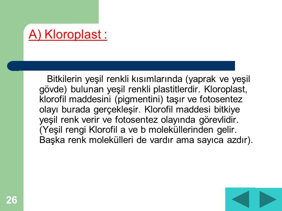 26 A) Kloroplast : Bitkilerin yeşil renkli kısımlarında (yaprak ve yeşil gövde) bulunan yeşil renkli plastitlerdir.