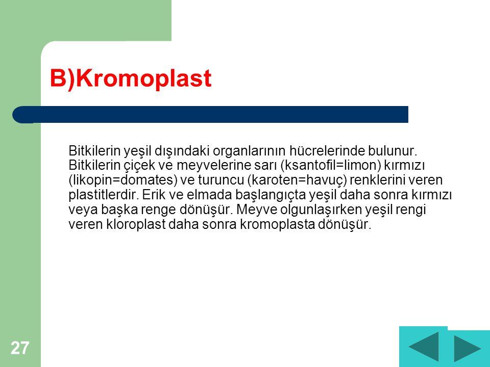 27 B)Kromoplast Bitkilerin yeşil dışındaki organlarının hücrelerinde bulunur.