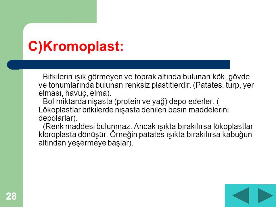 28 C)Kromoplast: Bitkilerin ışık görmeyen ve toprak altında bulunan kök, gövde ve tohumlarında bulunan renksiz plastitlerdir.