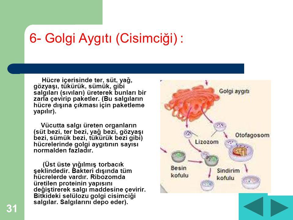 31 6- Golgi Aygıtı (Cisimciği) : Hücre içerisinde ter, süt, yağ, gözyaşı, tükürük, sümük, gibi salgıları (sıvıları) üreterek bunları bir zarla çevirip paketler.