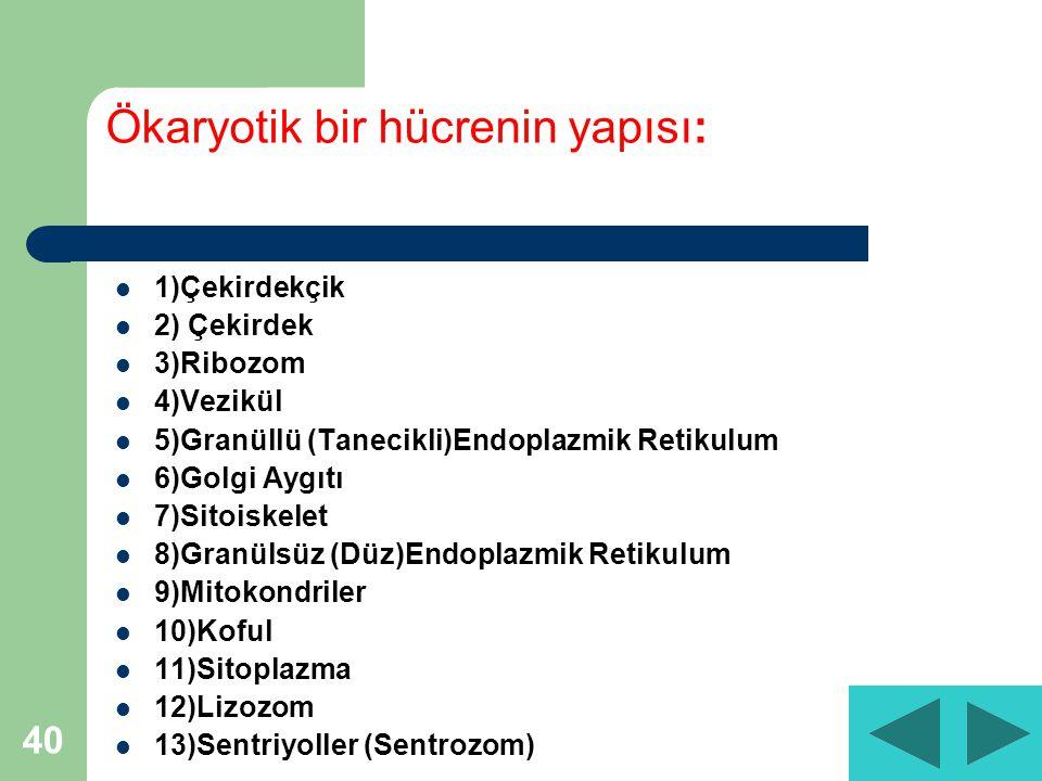 40 Ökaryotik bir hücrenin yapısı: 1)Çekirdekçik 2) Çekirdek 3)Ribozom 4)Vezikül 5)Granüllü (Tanecikli)Endoplazmik Retikulum 6)Golgi Aygıtı 7)Sitoiskelet 8)Granülsüz (Düz)Endoplazmik Retikulum 9)Mitokondriler 10)Koful 11)Sitoplazma 12)Lizozom 13)Sentriyoller (Sentrozom)