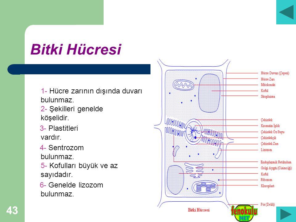 43 Bitki Hücresi 1- Hücre zarının dışında duvarı bulunmaz.