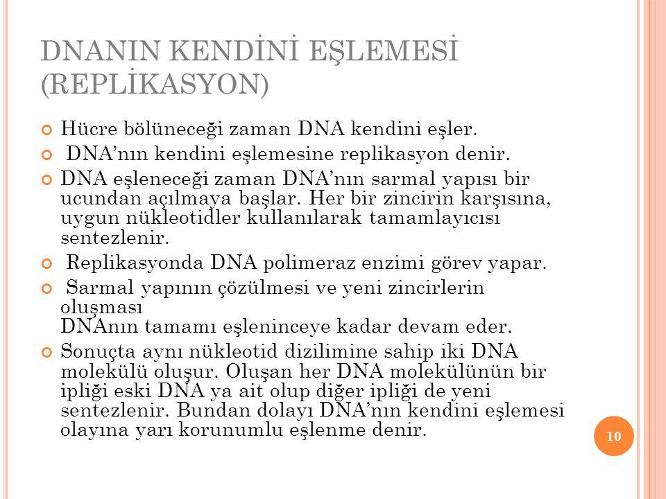 DNANIN KENDİNİ EŞLEMESİ (REPLİKASYON) Hücre bölüneceği zaman DNA kendini eşler. DNA'nın kendini eşlemesine replikasyon denir. DNA eşleneceği zaman DNA