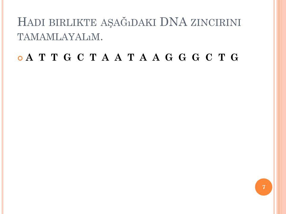 H ADI BIRLIKTE AŞAĞıDAKI DNA ZINCIRINI TAMAMLAYALıM. A T T G C T A A T A A G G G C T G 7