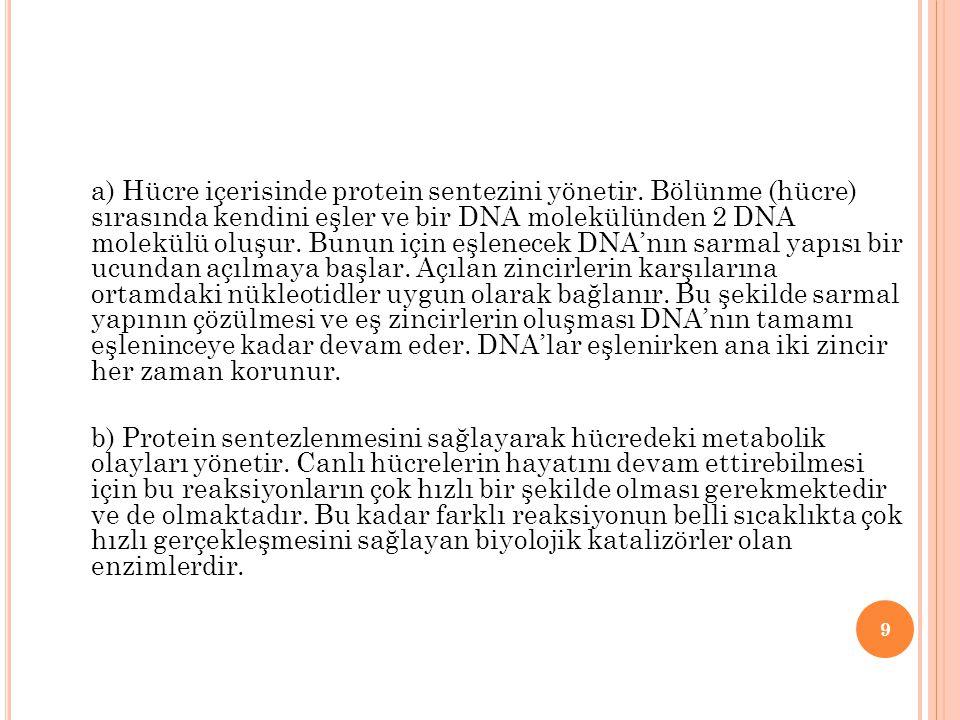 DNANIN KENDİNİ EŞLEMESİ (REPLİKASYON) Hücre bölüneceği zaman DNA kendini eşler.