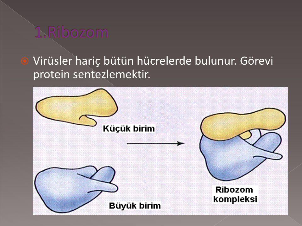  Hücredeki yapı ve görev birimlerine organel denir.