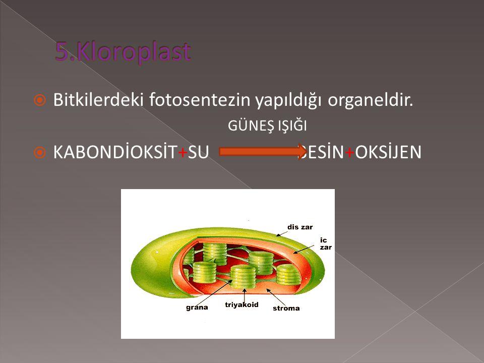 Hücre solunumu sonucu enerji veren organellerdir. BESİN+OKSİJEN KARBONDİOKSİT+SU+ENERJİ