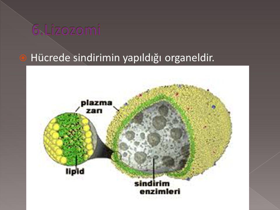  Bitkilerdeki fotosentezin yapıldığı organeldir. GÜNEŞ IŞIĞI  KABONDİOKSİT+SU BESİN+OKSİJEN