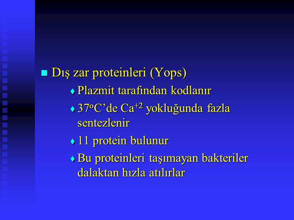 Dış zar proteinleri (Yops) Dış zar proteinleri (Yops)  Plazmit tarafından kodlanır  37 o C'de Ca +2 yokluğunda fazla sentezlenir  11 protein bulunu