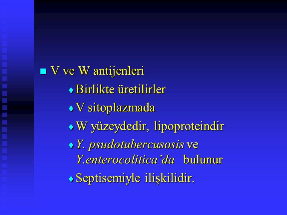 V ve W antijenleri V ve W antijenleri  Birlikte üretilirler  V sitoplazmada  W yüzeydedir, lipoproteindir  Y. psudotubercusosis ve Y.enterocolitic