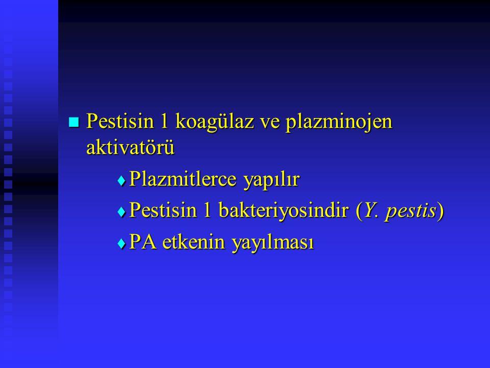Pestisin 1 koagülaz ve plazminojen aktivatörü Pestisin 1 koagülaz ve plazminojen aktivatörü  Plazmitlerce yapılır  Pestisin 1 bakteriyosindir (Y. pe