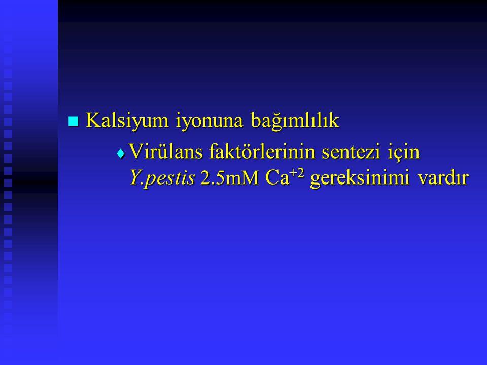 Kalsiyum iyonuna bağımlılık Kalsiyum iyonuna bağımlılık  Virülans faktörlerinin sentezi için Y.pestis 2.5mM Ca +2 gereksinimi vardır