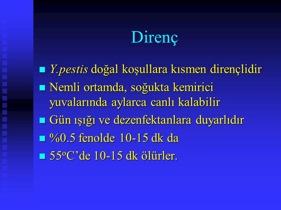 Direnç Y.pestis doğal koşullara kısmen dirençlidir Y.pestis doğal koşullara kısmen dirençlidir Nemli ortamda, soğukta kemirici yuvalarında aylarca can