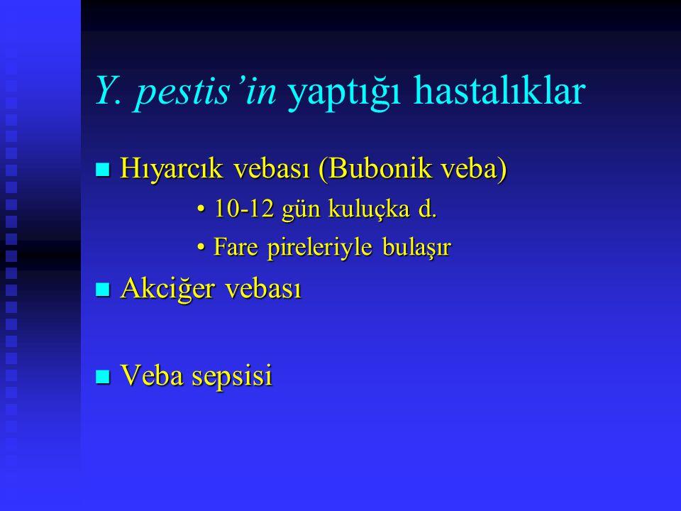 Y. pestis'in yaptığı hastalıklar Hıyarcık vebası (Bubonik veba) Hıyarcık vebası (Bubonik veba) 10-12 gün kuluçka d.10-12 gün kuluçka d. Fare pireleriy